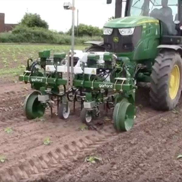 Robocrop InRow Weeder - Pumpkins